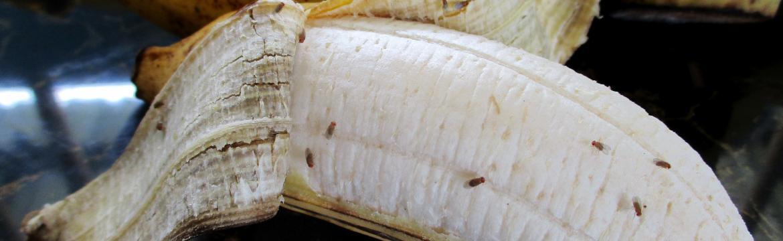 Vyžeňte otravné octomilky a mušky z vaší domácnosti nadobro