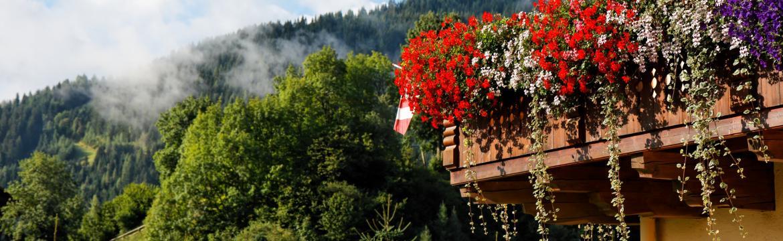 Krása květinových vodopádů vyžaduje vhodný výběr květin