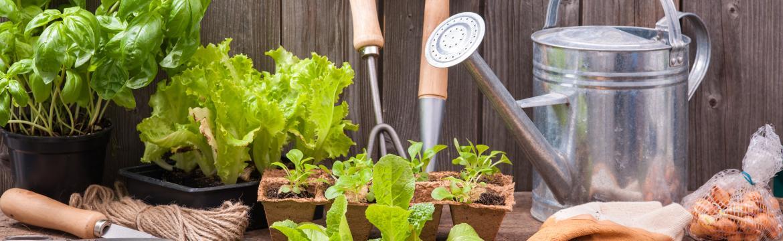 Zahrádka jako ze škatulky: Co pěstovat v červnu?