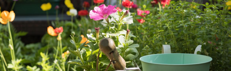 Zahrada v srpnu – jak o ni pečovat, jak kvete, co všechno můžeme sklízet a co ještě zasadit?