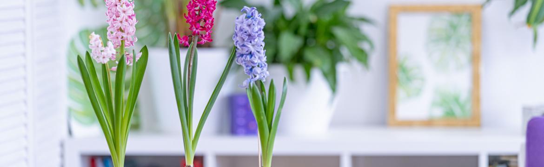 4 tipy na jarní výzdobu bytu: Jednoduše, rychle a hlavně nenásilně