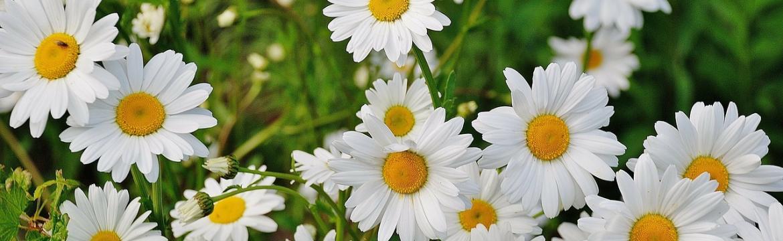 Z krásy květin se můžete těšit nejenom na zahradě či ve váze, ale také na talíři …