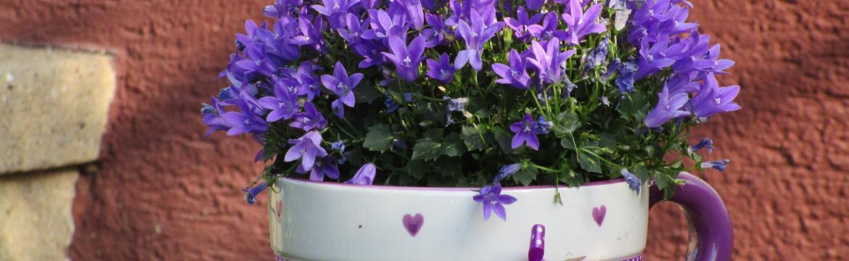 Nepodceňujte přípravu na léto a dejte květinám zelenou již teď...
