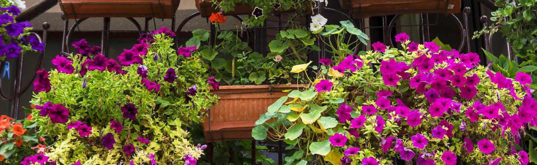 Jak na to, aby váš balkón krásně rozkvetl
