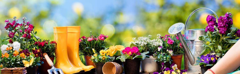 Největších 5 chyb, jichž by se měl každý, kdo začíná zahradničit, vyvarovat