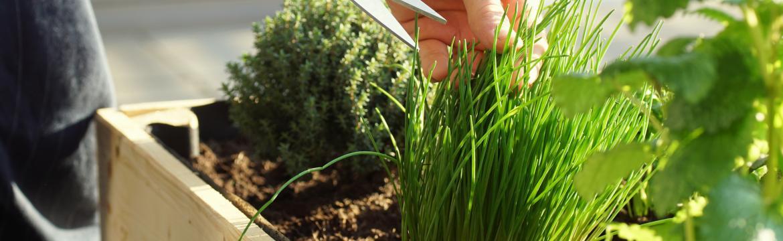 Pěstovat bylinky v bytě? Ano, dá se to! Poradíme, jak na to