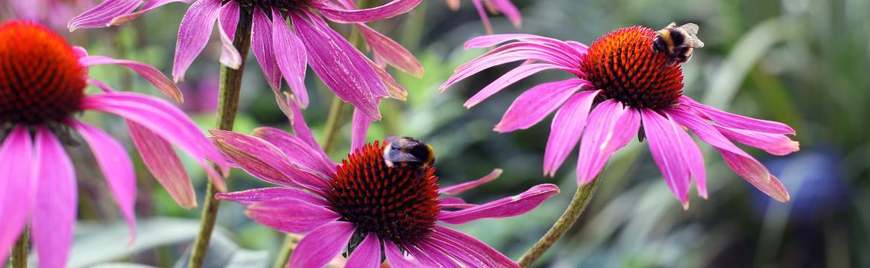 Tajemství kvetoucí zahrady s minimem práce spočívá v trvalkách