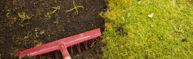 Trápí vás a vaši zahradu mech? Poradíme, jak se ho zbavit. Zásadní je zdraví samotného trávníku