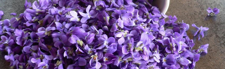 Jaro voní fialově. Po fialkách. I když …