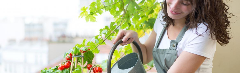 Balkonová rajčata: Jak je pěstovat, na co si dávat pozor, co jim svědčí a nesvědčí?