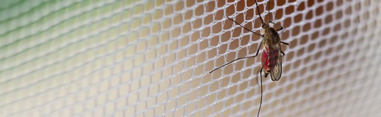 Léto a komáři – jak proti nim účinně bojovat?