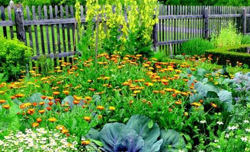 Biozahradničení je životní styl. Hodí se do užitkové i okrasné zahrady