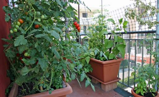 Nemáte zahradu? Nevadí, zeleninu můžete pěstovat i na balkoně nebo terase