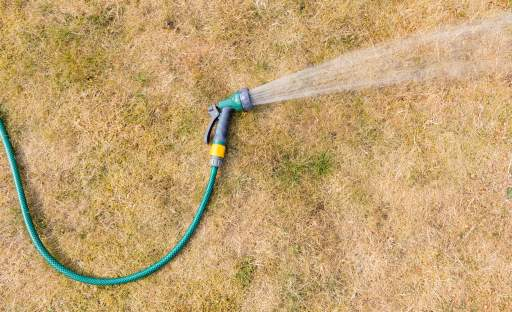 Sucho nás letos trápí už od jara. Co dělat, aby trávník zůstal zdravý?