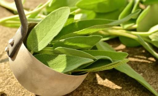 Nenáročná bylinka s mocnými účinky – šalvěj lékařská