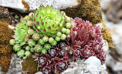 I v suchu může zahrada kvést. Jde jen o to vybrat správné rostliny …
