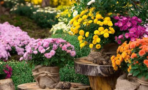 Symbol babího léta i nadcházejícího podzimu