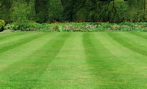 V období sucha vyžaduje trávník zvláštní péči
