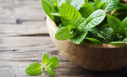 Zubní pastu si vypěstujete na zahradě či v květináči na balkoně