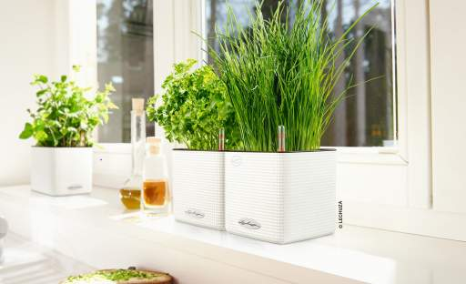 Vypěstovat bylinky můžete i na okenním parapetu