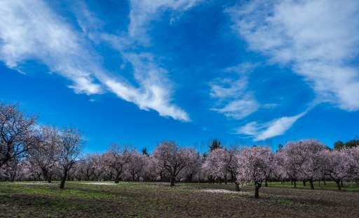 Strom stisíciletou historií, o němž se píše i v bibli