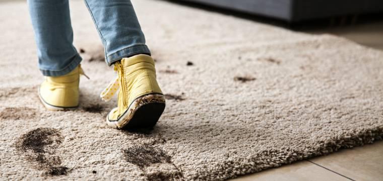 Nedejte bahnu šanci, aby atakovalo váš byt: 4 dobré rady, jak to provést