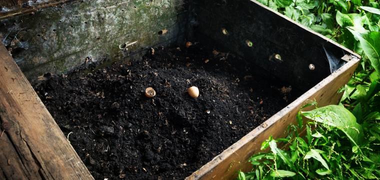 Zahradničení s kompostem: Jak kompost pomáhá rostlinám a půdě?