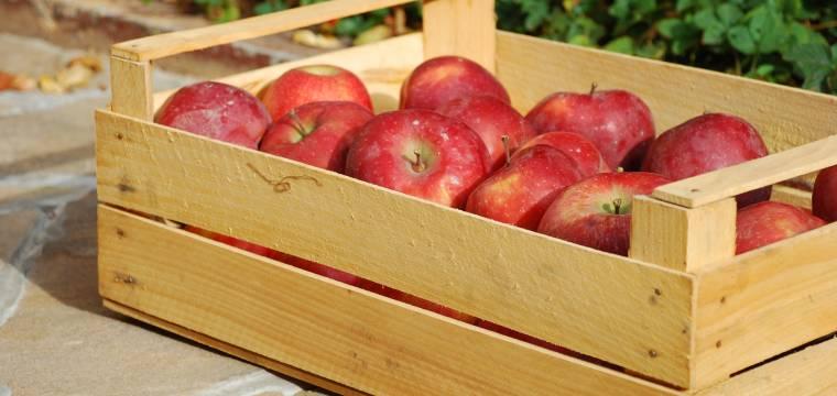 Naučte se správně uskladnit letní úrodu v domácích podmínkách