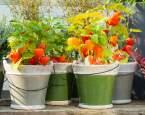 Veselé lampionky rozzáří vaši zahradu, talíř i pleť