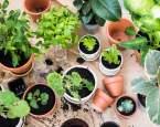 Které bylinky vysadit začátkem jara? Máme 4 tipy