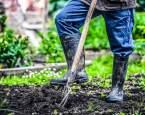 První práce na zahradě s příchodem jara. Co udělat jako první?
