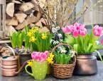 Pořiďte si domů jednu z typických velikonočních květin. Co symbolizují?
