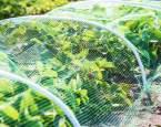 Bezpečná zahrada: Jak z ní učinit místo přátelské pro vaše domácí mazlíčky