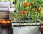 Nemáte zahrádku? Nevadí, zeleninu vypěstujete i na balkoně nebo terase